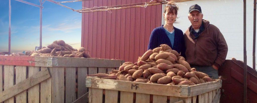 sweet potato farm oklahoma